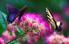Butterflies smile photo by John White Photography