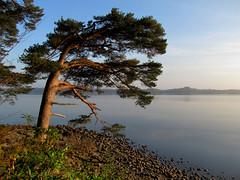Morning at Muckross Lake photo by Barbara Walsh Photography
