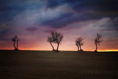 I35 Trees photo by 303Photos