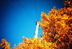 Autumn gold photo by lomomowlem