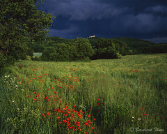 Field with poppy flowers and castle before the rain photo by Bernhard_Thum