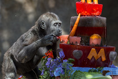 Yum, Yum Birthday Cake! photo by San Diego Zoo Global