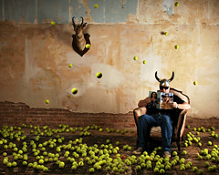 Tennis Ball Obsession photo by Studio d'Xavier