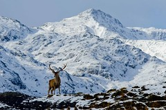 Winter in Lochaber photo by VisitScotland
