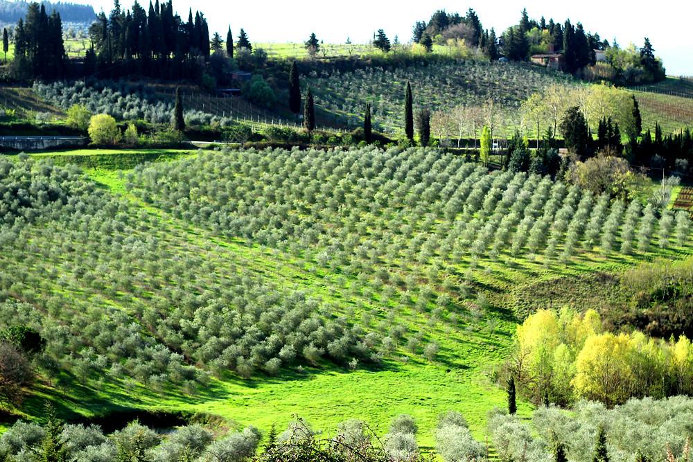 Toscana 50