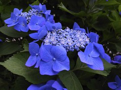 Fantastic blue !  (RICOH GR-DIGITAL II) photo by potopoto53age