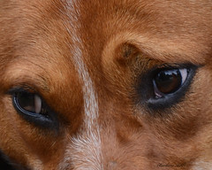 Meggie's Patient Eyes (Explored) photo by misst.shs