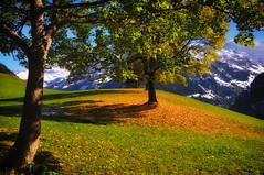 Autumn photo by ceca67