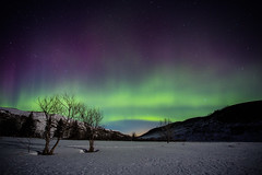 Aurora Borealis at Big Valley Springs photo by Brett Abernethy