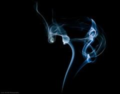 Smoke Tail photo by Luis Perish