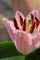 Lily in the sunlight photo by Ramona R*** - Visual Metaphors