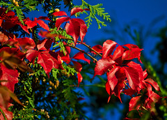 Autumn Glory photo by Fire Fly5