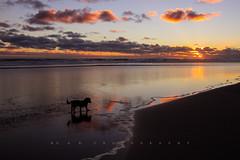 Doggie at Sunset photo by Fernandez Barrett