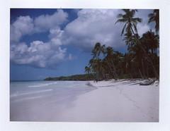 Paradise. photo by new.brighton