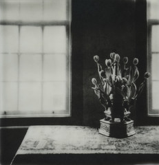 Tulip Vase, Amsterdam photo by H Polley