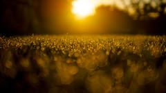 Morning dew photo by Aussie.in.Guernsey