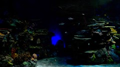 Ripley's Aquarium - Toronto photo by MorboKat