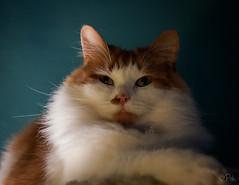 Idefix : The Pasha photo by Teensy-Weensy Pouchou