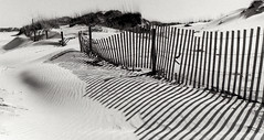 Dunes on Film photo by Francine Schumpert