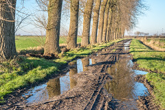 Country road after the rain photo by RuudMorijn