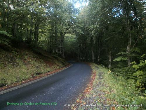 Route en sous-bois près de Condat (Cantal)
