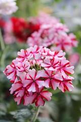 September's Dreamy Blossoms photo by bigbrowneyez