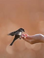 Gentle touch of tiny feet photo by akurashashin