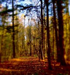 Ts's Autumn :) photo by miles smile