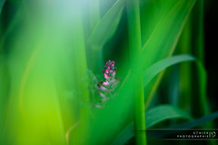 Hidden photo by Sonick Photographie