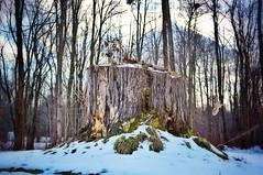 A Stump photo by Rev. Evan Clark