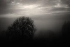 Misty Morning photo by pigpogm