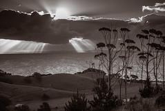 Eucalyptus trees at sunset photo by xlsmile
