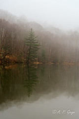 Reflections in the Fog photo by APGougePhotography