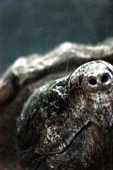 evil eye (cc) photo by marfis75