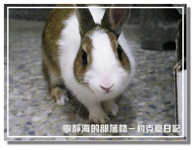 約克夏日記_20060302_小兔俏佳人