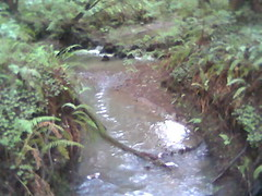 stream 3 Butano State Park.jpg