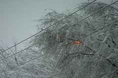 Snowy Branches Hit the Power Line