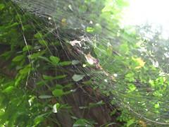 Jardiín Botanico - araña