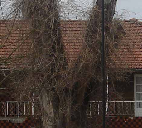 árvoretorga