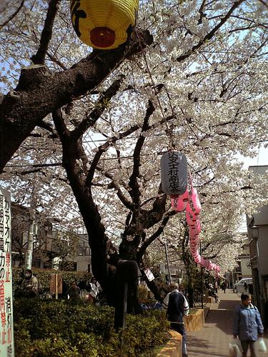 馬込文士村桜並木