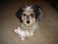 Minnie Bunny