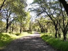 Upper Bidwell Park