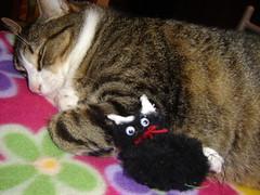 Presente Gato do D.