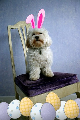 Wink wishes you a hoppy easter