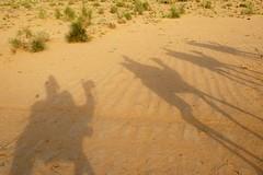 Camel Shadows, Jaisalmer, Rajasthan, India Captured April 12, 2006.