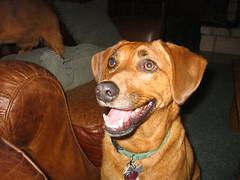 Smiling Gus
