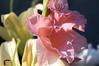 花(APO LANTHAR 90/3.5)