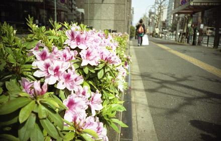 浅草通り1