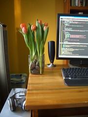 tulip 5/5