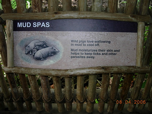 mudspas